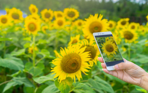 Android Phones With the Best Cameras